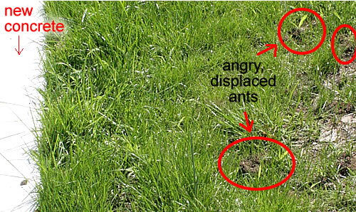 Hey ants get off my lawn ccuart Choice Image
