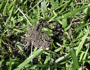 Hey Ants – Get Off My Lawn!