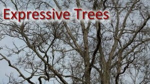 The Sunday Walk: Finding Shapes in Trees